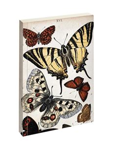 Jay Biologica Butterfly Writing Pad Ruled Notebook