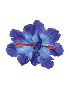 Lady Luck's Debra Double Blue Hibiscus Flowers