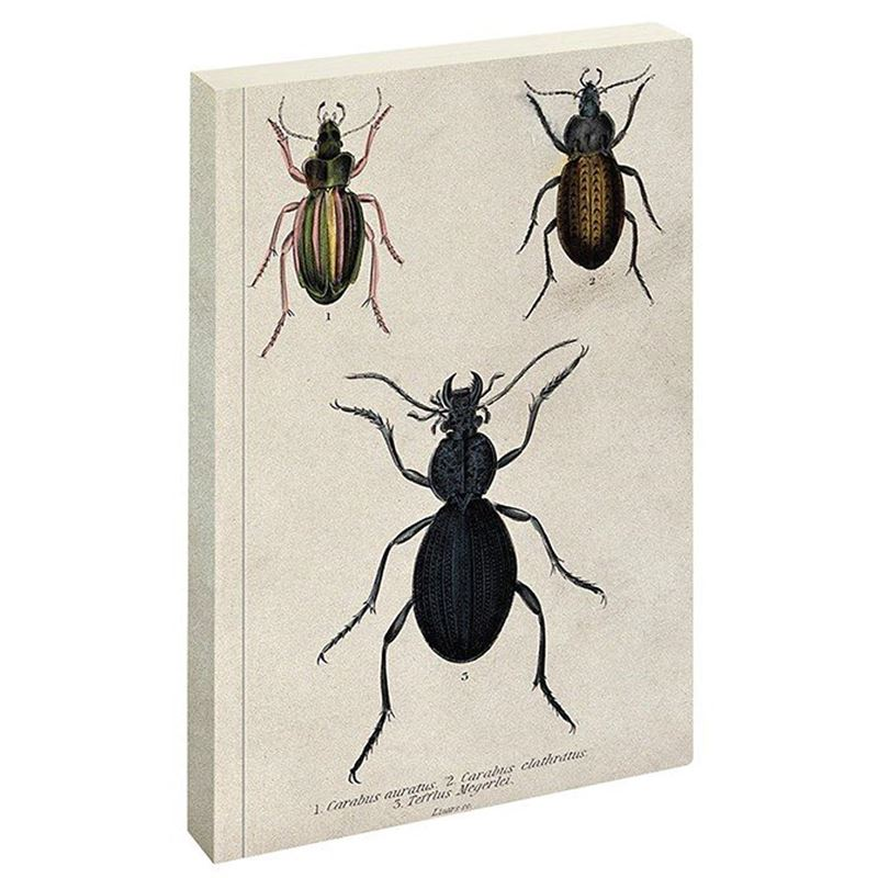 Jay Biologica Beetle Writing Pad Ruled Notebook